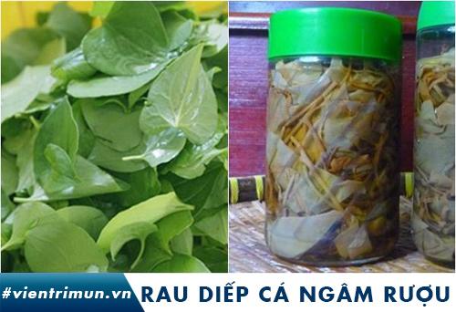 cách trị mụn bằng rau diếp cá